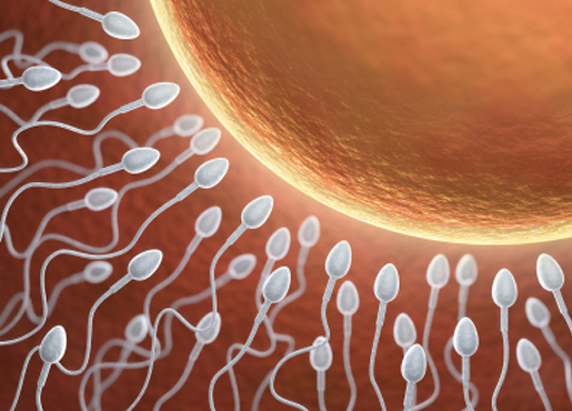 Sperm to egg timing