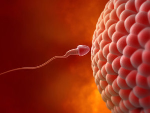 sperm and egg, Unexplained Infertility Causes, common causes of unexplained infertility