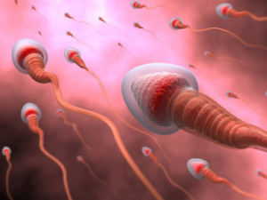 quality of the semen, how to improve quality of seman, fertility infertility seman analysis