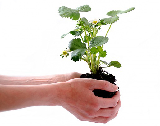 grows plant naturally