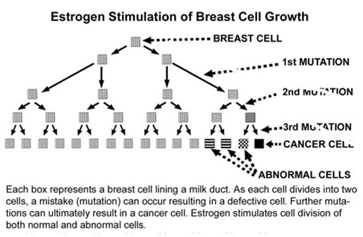 estrogen levels, estrogen stimulation