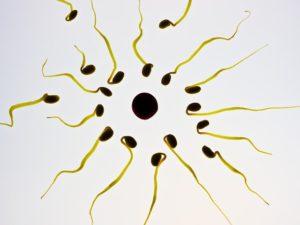 sperm-956481_640
