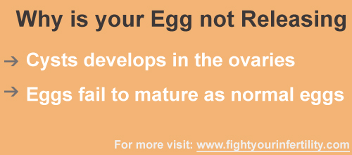why is my egg not releasing, when does my egg release, when is the egg released during your period, pcos egg not released