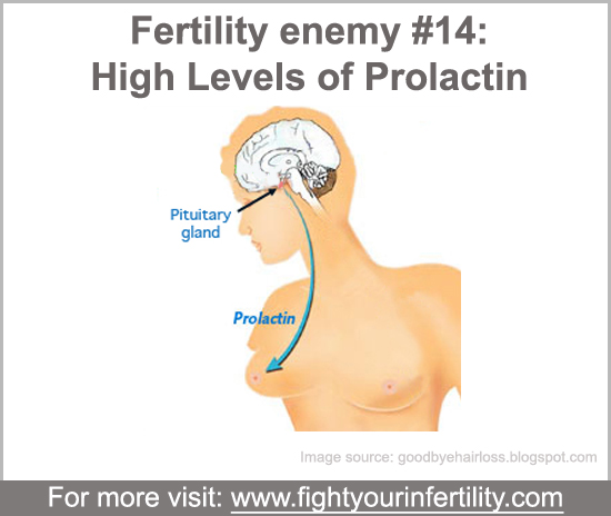 High levels of prolactin, high levels of prolactin causes, high levels of prolactin and infertility, increase in prolactin