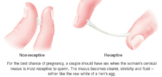 Mucus Plug Pictures Color Losing Pregnancy Labor