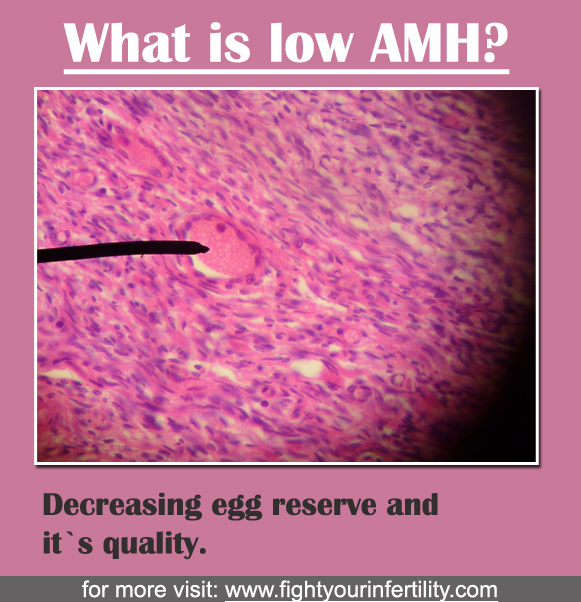What is low AMH, how to get pregnant with low amh levels, what happens when amh is low, amh and pregnancy