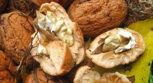 fresh-walnuts-1100489_640